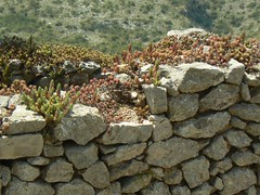 Plants on wall (uempe (only sporadically here)) Tags: espaa mountain plant berg rock stone wall digital photo spain europa eu