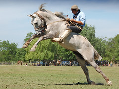 El tordillo malo (Eduardo Amorim) Tags: horses horse southamerica argentina c