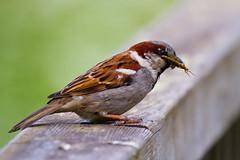 Dinner for the Kids (jontlaw) Tags: road nature reserve leamington spa warwickshire radford