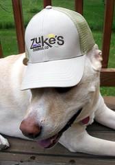 Zukes_Zeus_hat_510c