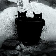 Asymmetric cats