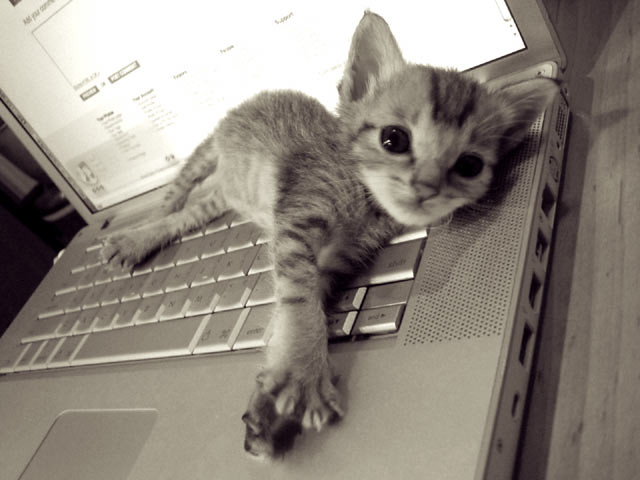 cute tabby kitten lying on computer