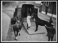 Useful form of horse ambulance being used in France by National Library of Scotland