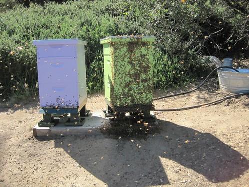 beekeeping 259 (650 x 488)