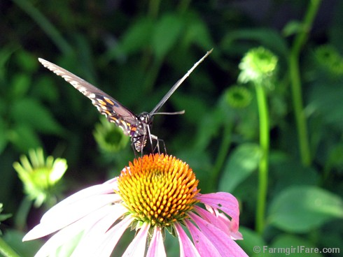 Attracting Pollinators 2