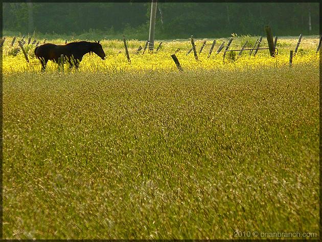 P1100718_horse