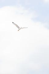 overexposed rapture (ion-bogdan dumitrescu) Tags: sea sky seagull gull romania overexposed bucharest bitzi mg2714 ibdp ibdpro wwwibdpro ionbogdandumitrescuphotography