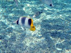 Bora-Bora, Polinésia Francesa (Luiz Carlos Costa Neto) Tags: snorkel snorkeling tahiti borabora polinésiafrancesa