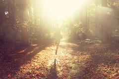 (Rowena R) Tags: autumn light sunlight colour fall forest canon jump r themed pathway rowena canonrebelt1i