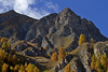 Larchwood @ fall, Swiss Alps. (Richard Verroen) Tags: sky mountain alps fall berg clouds landscape switzerland rocks swiss herfst summit alpen larch landschap switserland gebirge rotsen zwitserland graubünden lariks graubunden verroen richardverroen