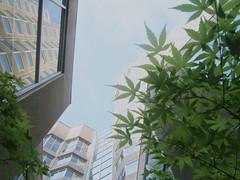 Me gusta! (Natu ~) Tags: hojas hotel edificio sheraton incubus