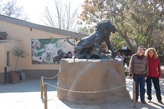 DSC_1951 (Michael Mura) Tags: africa park south lion leon leone 2010 gauteng sudafrica