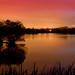 Two Pair (Stocker's Lake Reflections), Rickmansworth