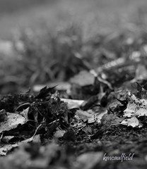 a time to rest (RainyDayKelli) Tags: blackandwhite grass leaves oregon dead death dof bokeh earth soil fiddy dontask lanecounty cottagegrove circleofconfusion natureycrap twofeetunder psooc hbsitbw ithinktheresaforkinthebackgroundthere