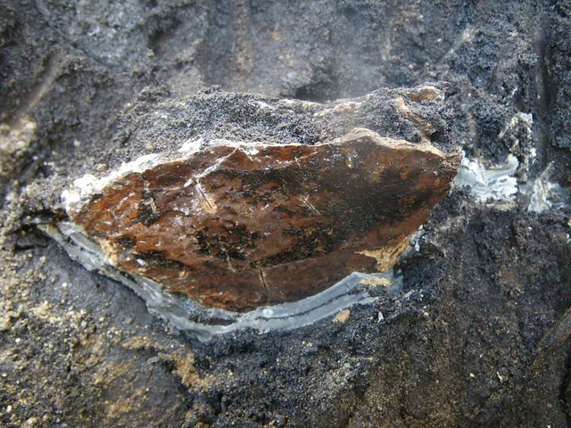 mysterious caliche surrounding bone