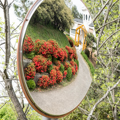 S17X9310 (Daegeon Shin) Tags: fujifilm xpro2 nikkor 55mmf28 mirror mirrorless reflection reflejo garden botanicgarden flower flor 후지 니콘렌즈 mf manualfocus 거울 반영 정원 경상남도수목원 꽃 수동 수동촛점