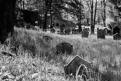 Jewish Cemetery (mripp) Tags: art graveyard jewish heritage jüdischer friedhof miltenberg bavarian bayern leica m10 summicron 50mm