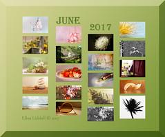 June 2017 at a glance (Elisafox22 slowly catching up again!) Tags: elisafox22 june 2017 collage snapshot images summary thumbnails border elisaliddell©2017