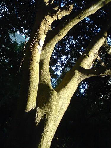 20091208_4
