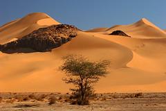 Upside Down Christmas Tree In The Desert (hapulcu) Tags: sahara algeria algerie argelia coth tadrart djanet itsanacacia mylongestphototitle