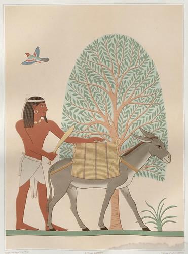 Histoire de l'art égyptien by Prisse D'Avennes, 1878 e