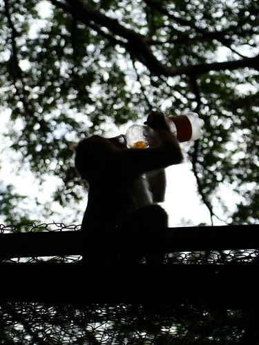 The drunked master