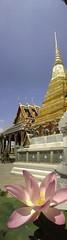 003-Lotus in Full Bloom (PEERAWAS) Tags: vertical thailand samsung mobilephone verticalpanorama verticalworld verticalphotography verticalcamera