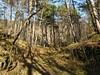 il bosco sopra Strada del Friuli
