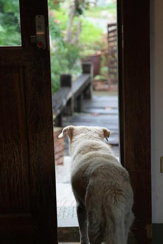 愛望著門外發愣的老賴