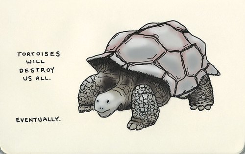 tortoises will destroy us all. eventually. / Jason Sweeney