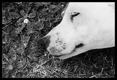 Stray (n.turner.photo) Tags: blackandwhite dog delete10 delete9 delete5 delete2 delete6 delete7 delete8 delete3 delete delete4 save ilfordhp5 perth hp5 nikonf65