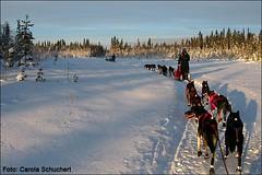 mushers-paradise-12.01.2010