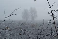 Il freddo (Blackeyedog) Tags: trees light tree fog landscape woods alba brina nebbia inverno freddo paesaggio umbria nocera umbra