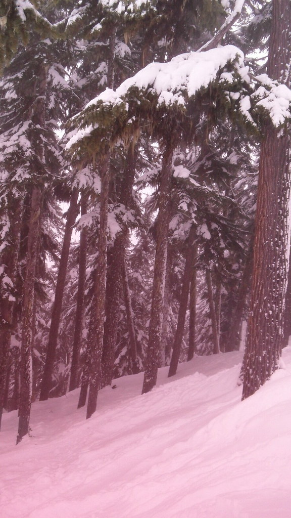 Whister Skiing in the Woods