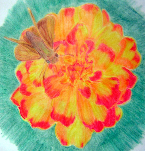 Fiery skipper in Prismacolor - new upload