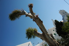 """Greek Tree • <a style=""""font-size:0.8em;"""" href=""""http://www.flickr.com/photos/46808277@N08/4303134597/"""" target=""""_blank"""">View on Flickr</a>"""