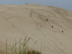 Sand dunes of the Cape Reinga