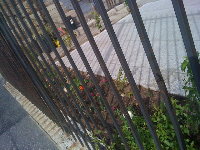 Random garden along Hollywood Blvd!