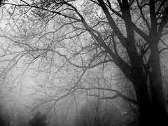 secrets in my mind (dehephotography) Tags: morning winter white snow black tree window lines silhouette fog canon devin power hendrick