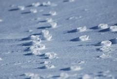 rose di ghiaccio (Antonio Cardillo) Tags: rose neve ghiaccio molise campitellomatese antoniocardillo montanaridelmolise