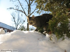 IMG_1016 (wojo4hitz) Tags: park snow storm rock creek cat dc washington hill snowstorm riding sledding february sled 2010 sledriding snowpocalypse 20510 20610 snomg snowmaggeddon snowpocalypse2 snowtoriousbig snowpocalypsedc