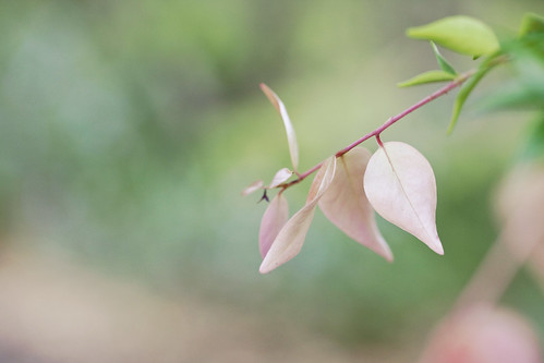 Outtake - Pink Leaves