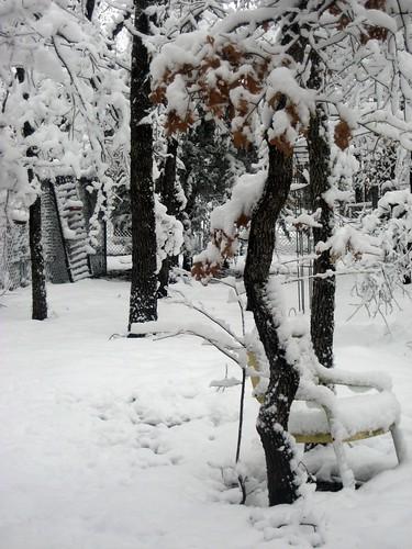 2010February12_Snow 003