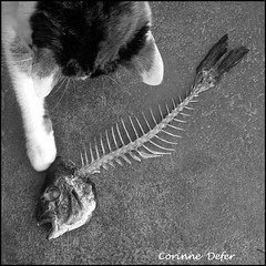 """arte chat !"" "" Fish bone cat! "" (Corinne DEFER - DoubleCo) Tags: blackandwhite bw reflection blancoynegro square blackwhite noiretblanc nb squareformat arrte negroblanco blackwhiteaward carrfranais corinnedefer monochromeaward updatecollection newgoldenseal artechat"