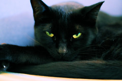 Malvada... (Cle e Turma) Tags: pet cats pets black cute animal cat canon blackcat kitten chat kitty gatos gato gata felinos felino neko katze gatto pantera gatas morgannah peludo peludos gatopreto catlovers catlover kittyschoice cl catmoments damigata damigatas diplomadebruxa t1i fotografiadegato fotografiafelina catphotografy felinephotografy morgannahpedragon