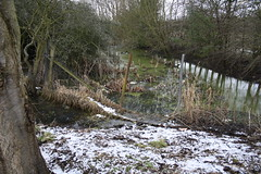 Day 90 - Reclamation (sarahkphotos) Tags: landscape wildlife shrewsbury rubbish stagnant greenfields nature100days