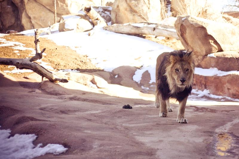 Zoo (14 of 15)