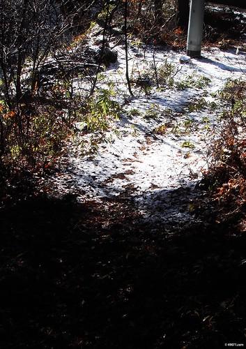 雪の次は、春のような天気!?四万温泉