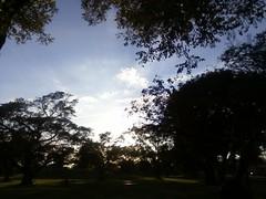 kendall lakes park (Prisc Roxx) Tags: park sky kendall tress