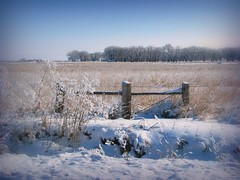 Roadside Beauty (Nature_Deb) Tags: morning blue trees winter sky plants white snow nature fence landscape frost hoarfrost country pasture grasses posts